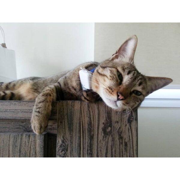 dispozitiv-de-localizare-prin-gps-pentru-caini-si-pisici-tractive-121-5293